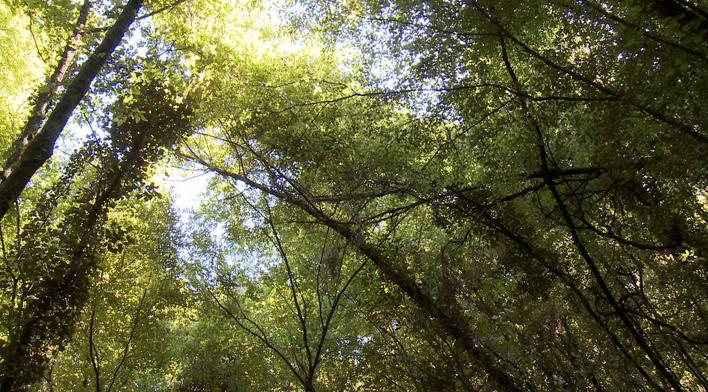 treetops_0